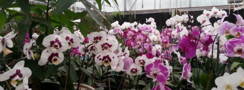 EFG Orchids
