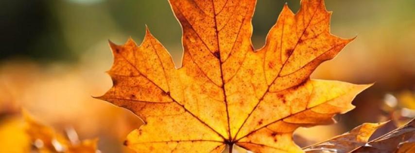 Last Days of Autumn Brewing