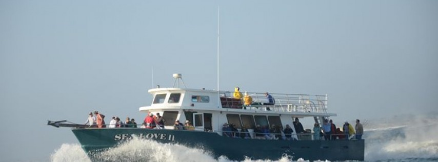 Sea Love Charters