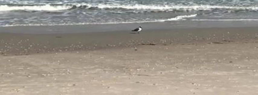 Vacation Rentals in Carolina Beach, NC
