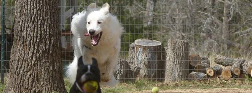 Doghouse Drinkery & Dog Park