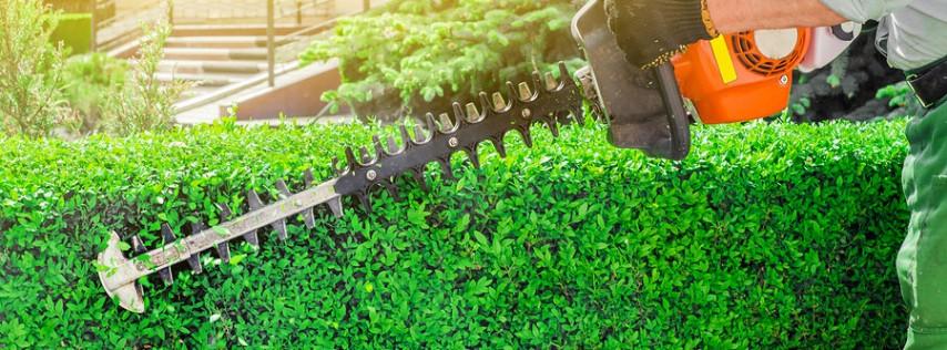 Itzel Ahoqui Lawn Service