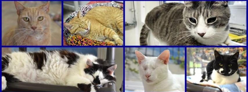 Blind Cat Rescue and Sanctuary, Inc.