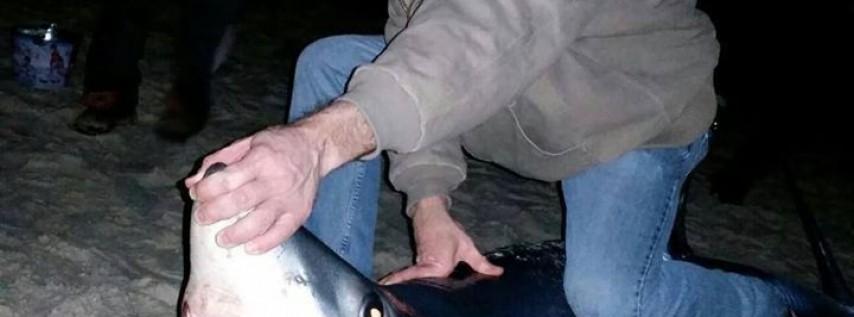 Off The Beach Shark Fishing Trips
