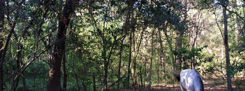 Wildwood Stables