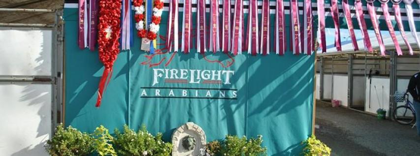 Firelight Arabians
