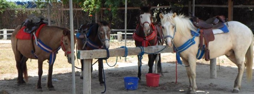 Pony Time At Lakewood Equestrian Center