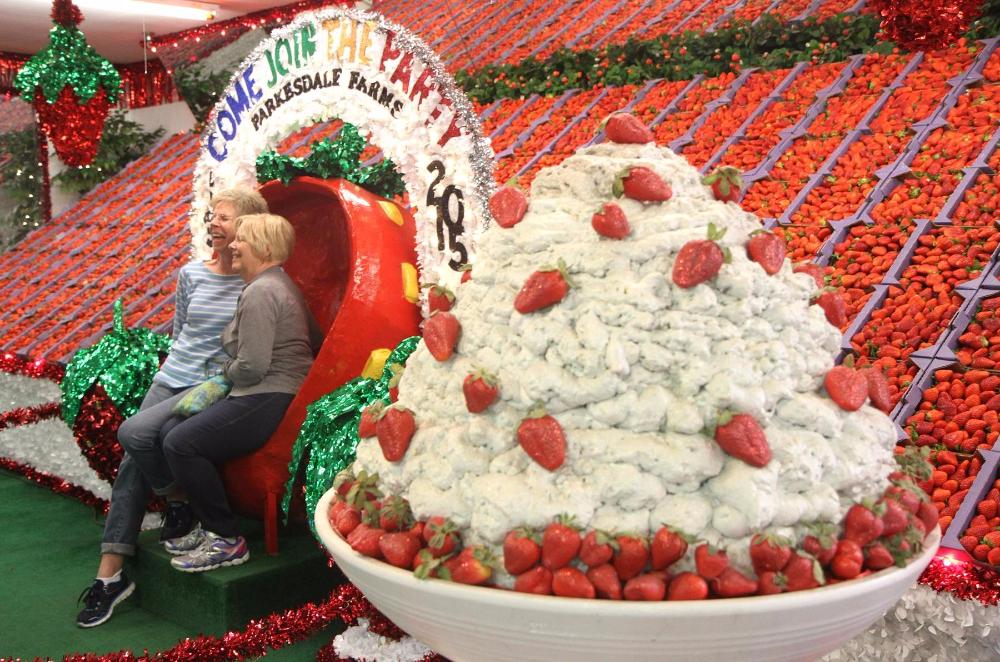 Best Cake In Tampa Fl
