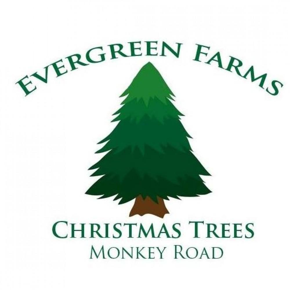 Evergreen Farms Christmas Trees - Shopping - Austin - Elgin