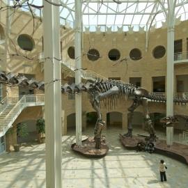 Fernbank Museum of Natural History