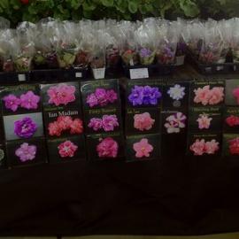 Appalachian Violets