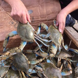 The Crab Lady
