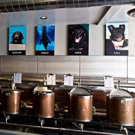 Diving Dog Brewhouse