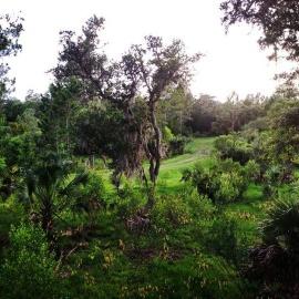 palm-coast