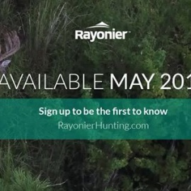 Rayonier Hunting
