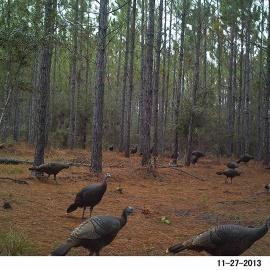 Sims Creek Hunting Club