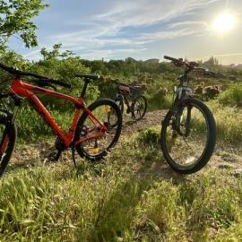 Growler Bikes