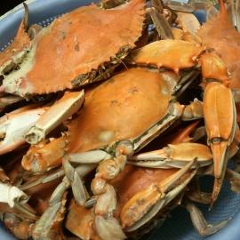 Lindy's Seafood