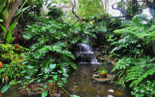 Marie Selby Botanical Gardens | Exotic Plants, Beautiful Scenery