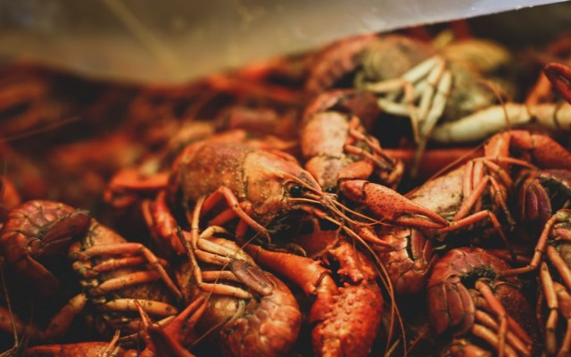 Crabs and Crawfish in Orlando   Shellfish, Lobsters, and More