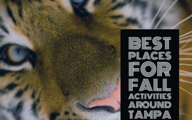 Outdoor Fun in Tampa Bay | Best Places for Fall Activites