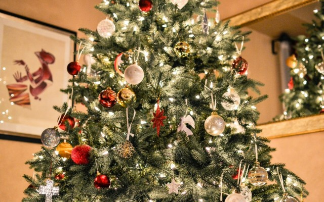 Where to Get Your Christmas Tree in Austin