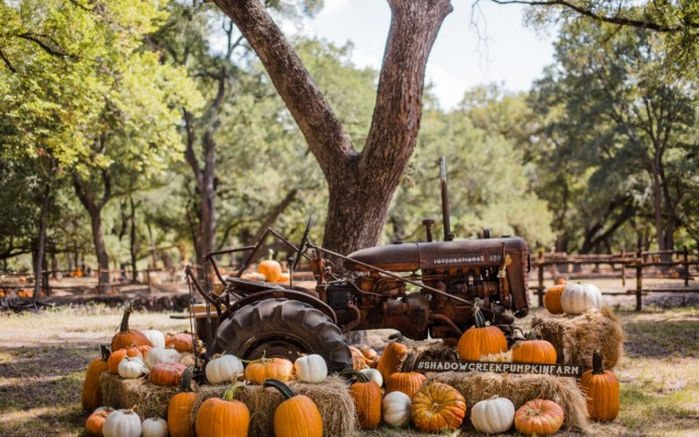 Halloween in Daytona and Volusia | Corn Mazes, Hayrides, Fall Fests and More