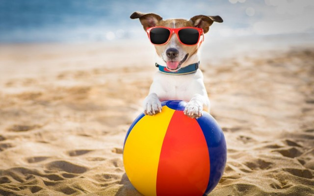 Dog-Friendly Places in Fort Lauderdale