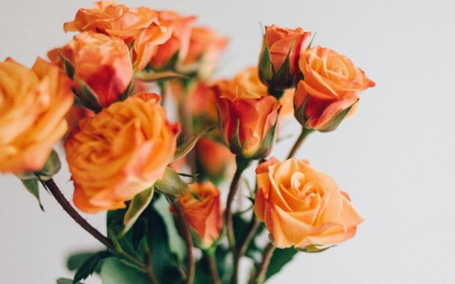 Flower Shops for Mother's Day in Fort Lauderdale