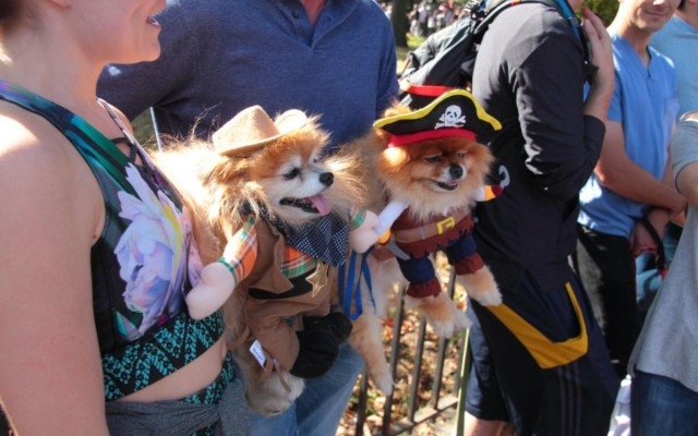 Howl-O-Ween is Back! Dress Your Furry Friend in These Fun Halloween Costumes!