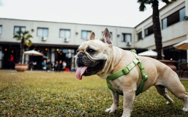 Dog-Friendly Restaurants in Sarasota