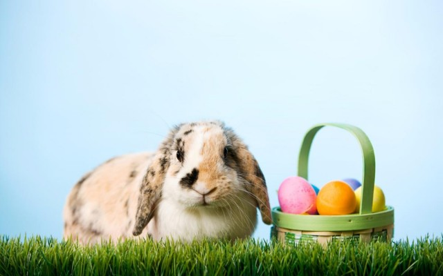 Where to Get Pictures with the Easter Bunny in St. Petersburg and Clearwater
