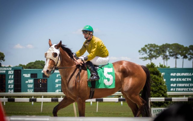 The History and Highlights of the Tampa Bay Downs