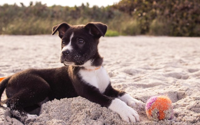 How to Keep your Pets Cool in the Florida Heat and Humidity!