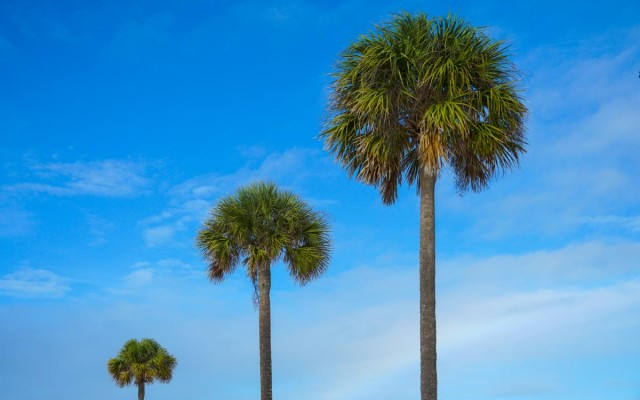 Things To Do in St. Pete and Clearwater This Weekend | January 21st - 24th