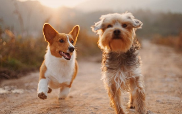 A Guide to West Palm Beach's Best Dog Parks