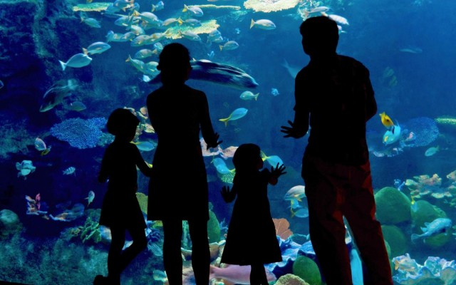 Where to Find Family-Friendly Fun in Tampa Bay