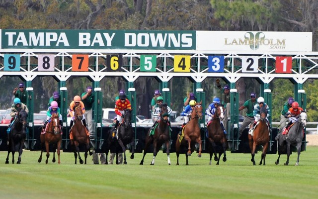 Skyway Festival Day Brings Three Huge Stakes Races to Tampa Bay Downs on January 20th