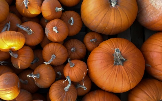 Pumpkin Patches Near Austin