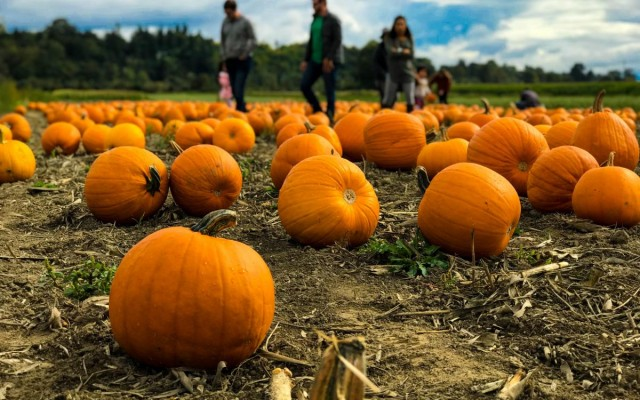 Upcoming Fall Festivals in Tampa   Oktoberfest, Family Festivals + More