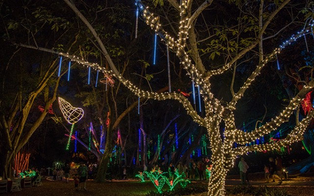 Lights in Bloom In Sarasota Makes A Romantic Date Night This Holiday Season