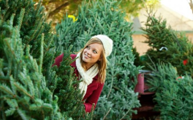 Best Places in Sarasota to Buy a Christmas Tree