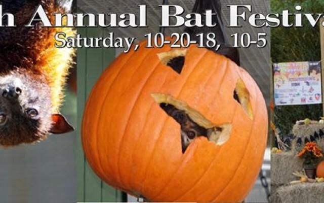 14th Annual Florida Bat Festival!