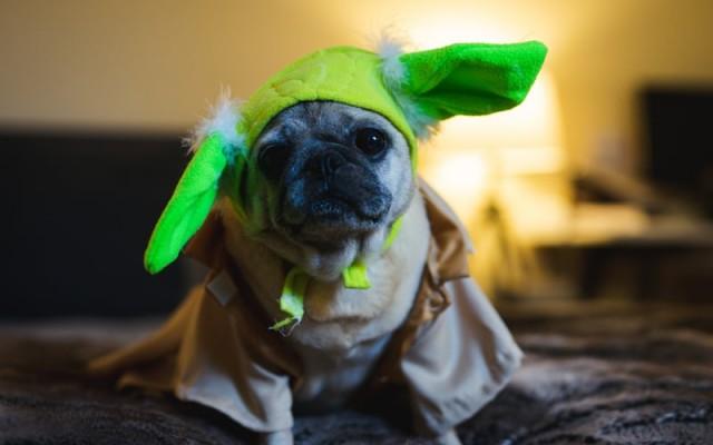 Sarasota Dog-O-Ween Costume Contest