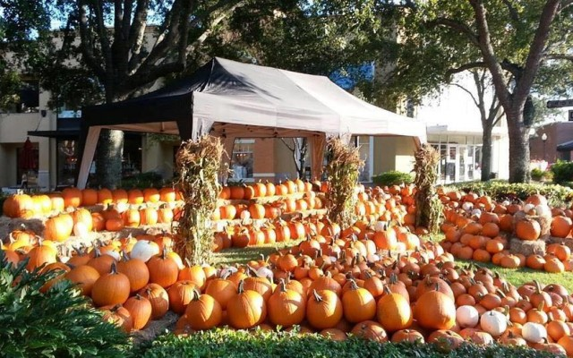 Kick Off Fall in Tampa at the Fall Festival in Hyde Park Village