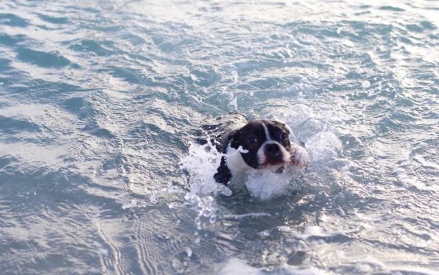 Dog-Friendly Beaches in Miami