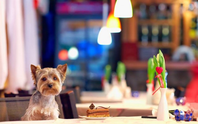 Pet Friendly Restaurants in Daytona Beach