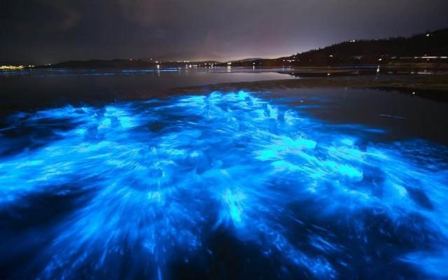 Bioluminescence Paddle Tour