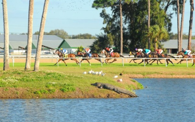 Stakes Saturday At Tampa Bay Downs!