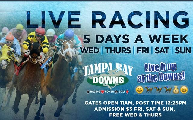 Live Racing at Tampa Bay Downs